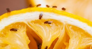 How to Get Rid of Gnats
