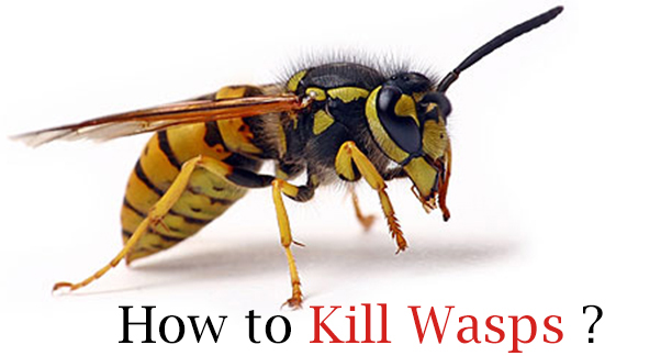 How Get Rid Of Wasps Naturally