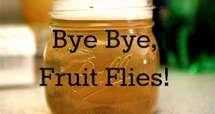 how to kill fruit flies