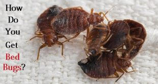 How do You Get Bed Bugs