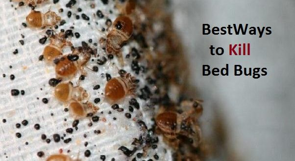 Ways To Kill Bed Bugs