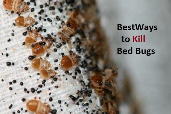 How to Kill Bed Bugs Naturally