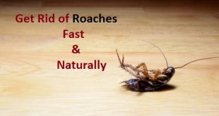 Get rid of roaches
