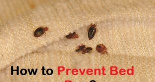 How to prevent bed bug