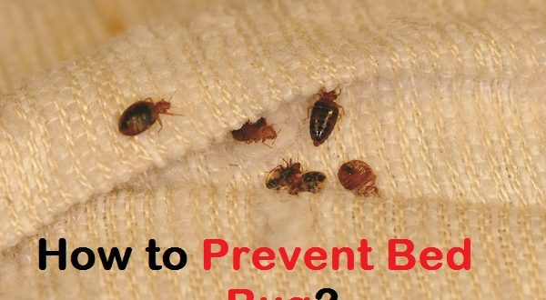 Can Bed Bugs Live On A Person