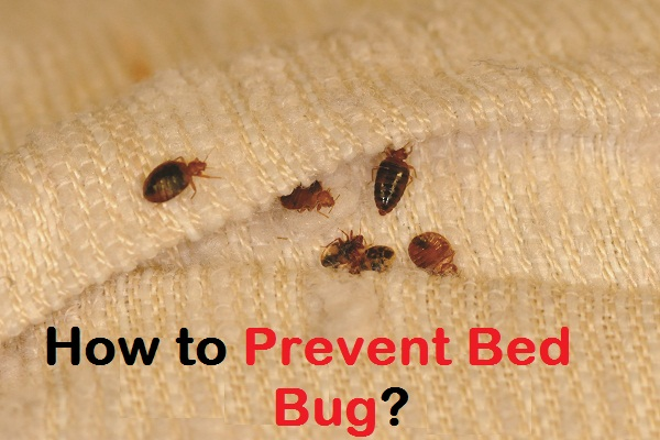 Bed Bugs Causes 28 Images Learn How To Remove Bed Bugs In Your Home Bed Bug Control London