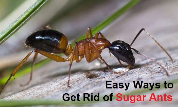Natural Ways To Keep Ants Away From Your House