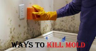 kill mold