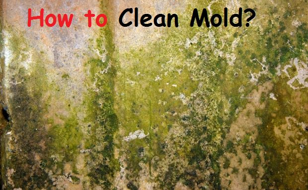 how to clean mold