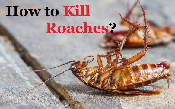How to Kill Roaches Fast?