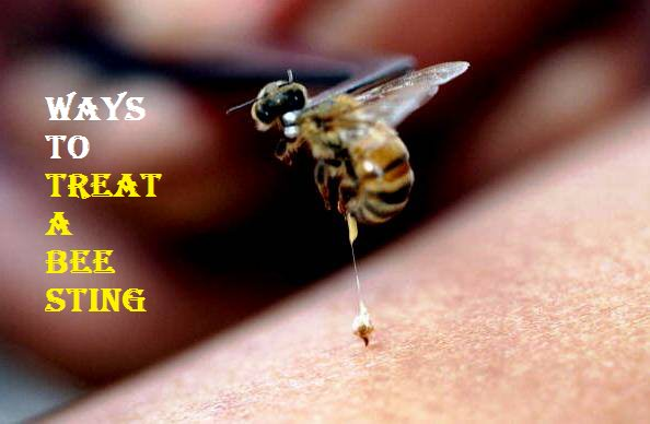 treat a bee sting