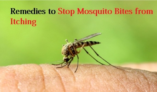 Home Remedies To Stop Mosquito Bites From Itching